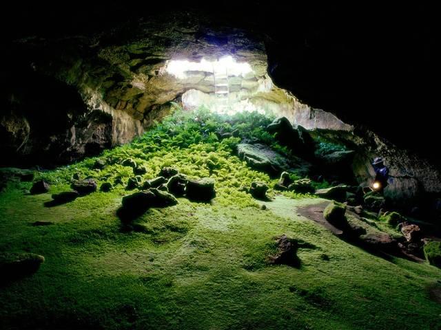 Jeskyně patří mezi místa, které dnes vábí především kluky se smyslem pro dobrodružství. Z těch nejoddanějších nakonec vyrostou profesionální jeskyňáři, speleologové. Ti při svých průzkumech často narazí na organismy, nad jejichž podivností se tají dech. 21. STOLETI vás nyní seznámí s těmi nejzvláštnějšími.