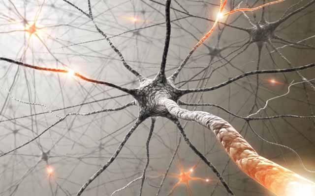 Otázka, jak vlastně funguje naše paměť, vzrušuje vědce celá staletí. Teprve moderní věda a moderní medicína nám jsou schopny poskytnout odpovědi, na které všichni čekáme. Pokroky ve zkoumání lidské paměti jsou patrné každým dnem. Zveme vás s pomocí nejnovějších vědeckých poznatků na objevné výpravy.