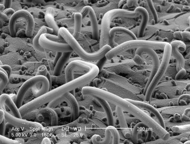 Uhlíková nanovlákna zažívají v posledních letech své vítězné tažení světem nových materiálů. Vyrobit z nich však komplikované tvary ve velikostech měřených v milióntinách metru však není snadné. S novou technologií přišli vědci z americké University of Michigan.