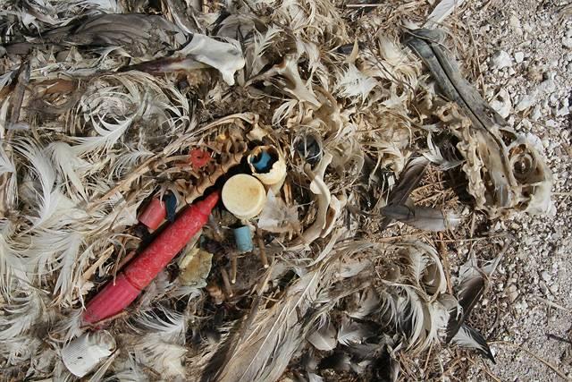O znečištění světových moří se píše a hovoří už desítky let. Dlouho se zdálo, že díky svým schopnostem samočištění a regenerace si vodní toky, moře a oceány s odpadem poradí. Posledních několik let se ale ukazuje, že tuny plastového odpadu, nakumulovaného ve světových oceánech za desetiletí lidské pasivity, nelze brát na lehkou váhu a je třeba se jimi vážně a neodkladně zabývat, než budou způsobené škody nevratné.
