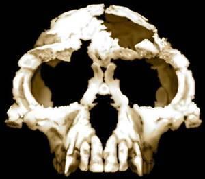 Kdy se vlastně rozešly evoluční kroky našich předků a předků našich nejbližších příbuzných, šimpanzů? Zatímco dřívější odhady se pohybovaly mezi 5-6 miliony let, nová studie britských vědců posunula tento odhad o pěkný kus dozadu. Nový odhad by mohl zásadně proměnit dosavadní představy o lidské evoluci.