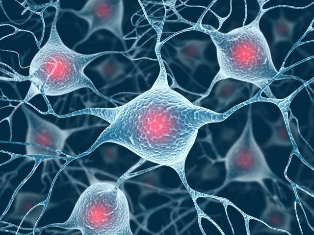 O tom, že uspořádání mozku savců a ptáků je v mnoha ohledech velmi odlišné, nepochybuje žádný z odborníků. Podle posledních výzkumů však existují části mozku, které jsou si mnohem podobnější, než vědci celé desítky let předpokládali. Američtí neurologové ze San Diega, kteří s objevem přišli, tak zatloukli další hřebík do pomyslné rakve savčí jedinečnosti.