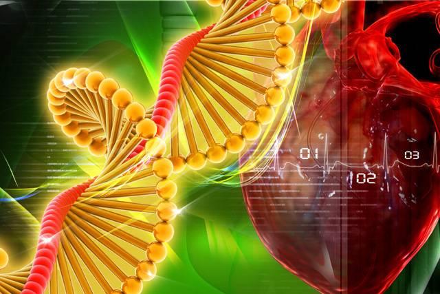 Díky nejnovějším poznatkům genetiky, molekulární biologie a dalších moderních oborů se v Praze zrodilo unikátní Centrum experimentálního výzkumu chorob krevního oběhu a orgánových náhrad – CEVKOON.