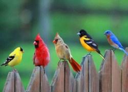 Mapa ptačích pastí upozorňuje na místa, kde ptáci nacházejí smrt