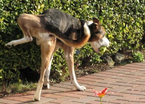 Psi se řídí při vyměšování magnetickým polem