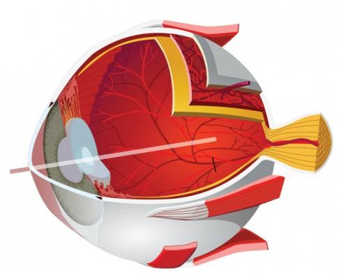 Nejnovější výzkum Co vidí v oku třetí buňky?