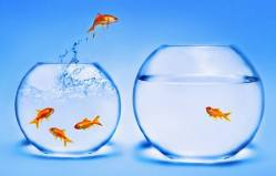 I akvarijní rybičky mají osobnost