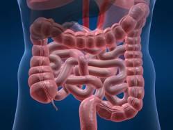 Nač máme apendix?