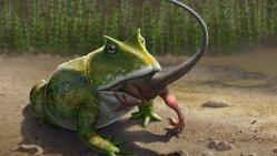 Obří žába: Beelzebufo ampinga