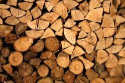 Vědci vytvořili dřevo pevnější než ocel