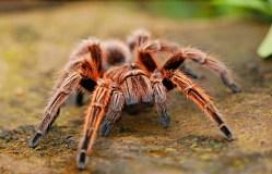 Starší dieselové motory přitahují pavouky