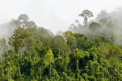 Stromy jako ovladač na déšť