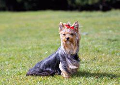 V Praze žije oficiálně 83 tisíc psů