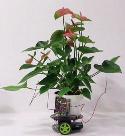 """Rostlina """"zkřížená"""" s robotem"""
