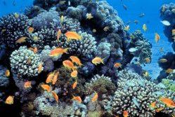 Jak zachránit korálové útesy? Lidé staví první pozemní korálovou farmu na světě!
