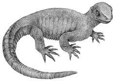 Nejstarší nalezený nádor je starý 240 milionů let. Patřil praželvě