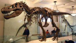 Tyrannosaurus Scotty: Rekordman z Kanady