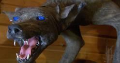 Tajemný tvor jménem čupakabra? Spíše jen nemocný pes…