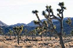 Americké národní parky se potýkají se znečištěným ovzduším