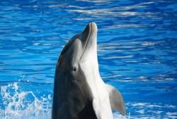 """V Oceánii došlo k """"adopci"""" elektry delfínem skákavým"""