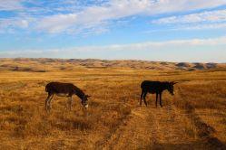 Poznejte historii a kulturu kazašské stepi