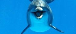 Praváci a leváci mezi delfíny