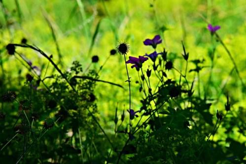 Vystresované rostliny vydávají zvuky. My je však neslyšíme…