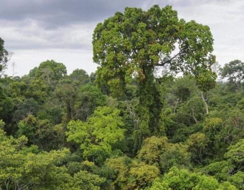Jaká teplota vzduchu je pro stromy kritická?