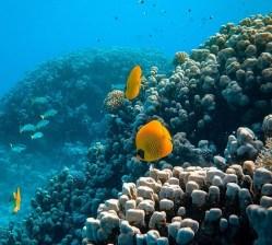 Výzkum podmořského světa stále láká