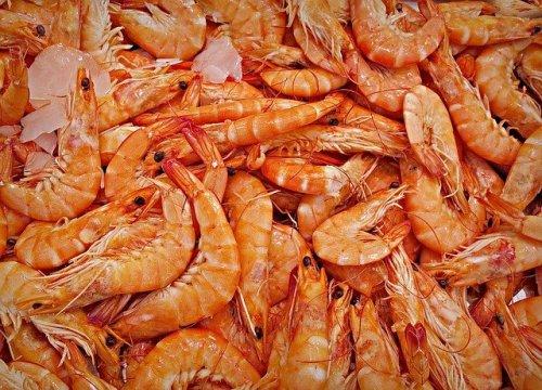 Novinka v trendu umělého masa: Strávníkům se dostanou na talíř krevety ze zkumavky…