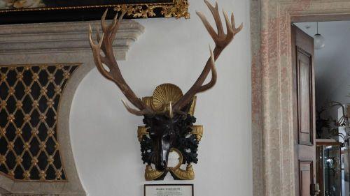 Před 290 lety byl uloven jelen šestadvacaterák