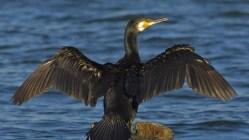 Ornitologové se radují
