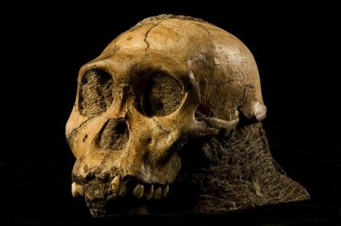 Byl poslední z australopitéků lidským předkem?