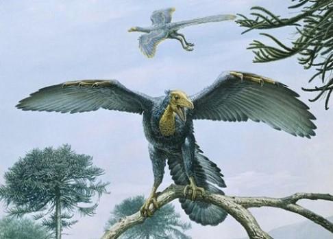 Měli všichni dinosauři peří?