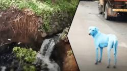 Záhada modrých psů