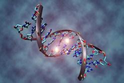 Brněnští vědci prozkoumali opraváře DNA