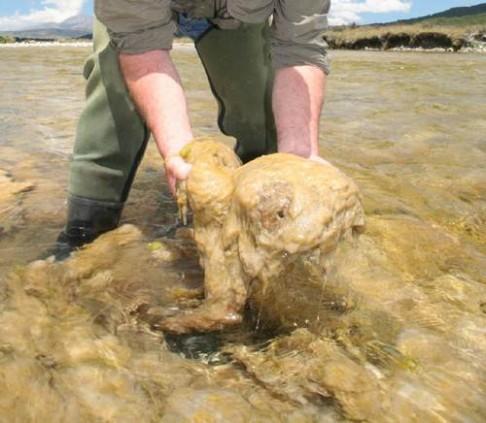 Kdo škodí v čisté vodě?