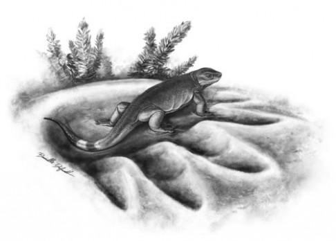 Nejstarší předek býložravců je starý 300 milionů let