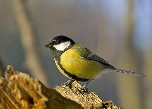 Soutěž na den ptactva