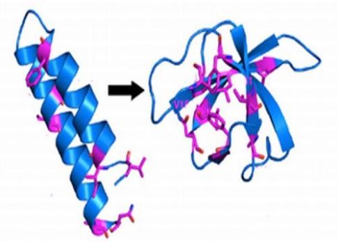 Protein s dvojí identitou