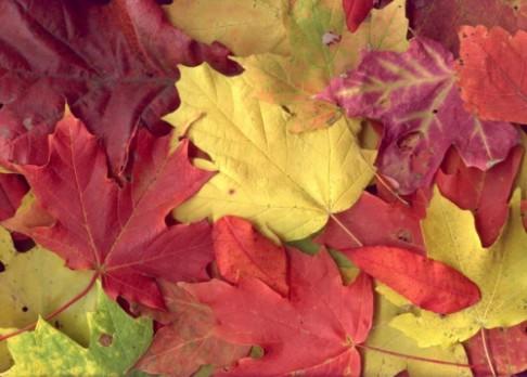 Chemická záhada podzimního listí