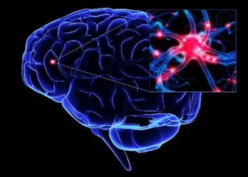 Mozek nikdy nespí