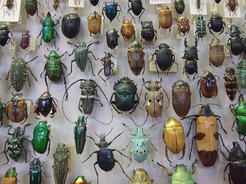 Kolik je na Zemi druhů?