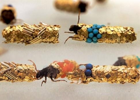 Šperky chrostíků