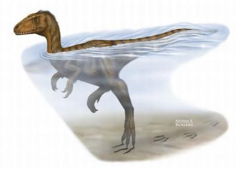 Dinosaurus přistižený při plavání
