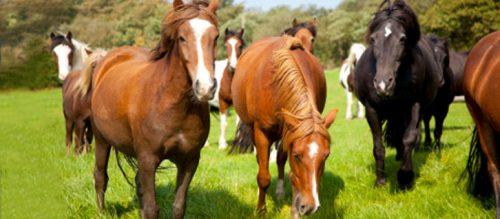 equine-banner-horse