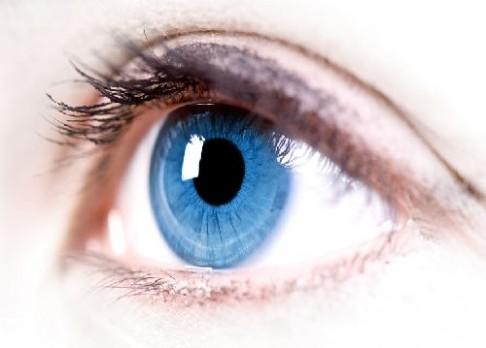 Oko – do mozku okno