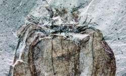 Nalezeny fosílie plodů ovoce staré 52 milionů let!