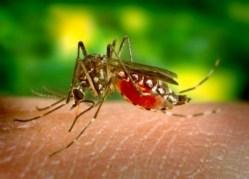 Komáři dávají přednost chutné krvi