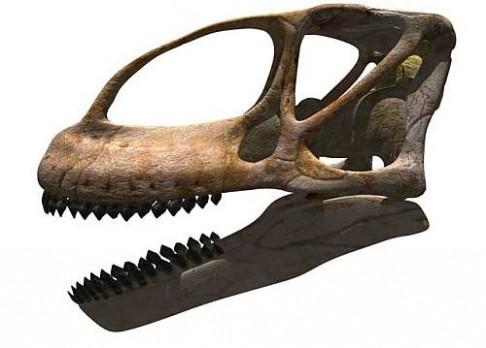 Objevena lebka největšího dinosaura